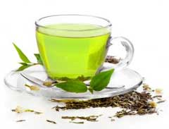 Green Tea Camellia Sinensis