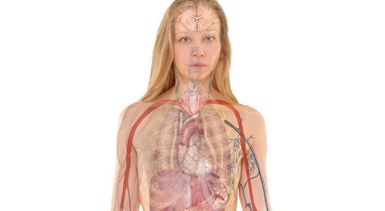 Moringa Superior Health Benefits for Respiratory System