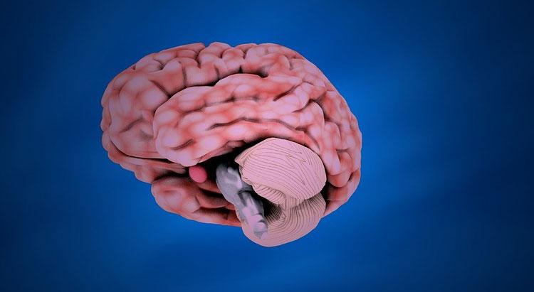 Moringa Benefits for Nerves and Nervous System