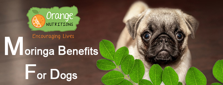 moringa for dogs